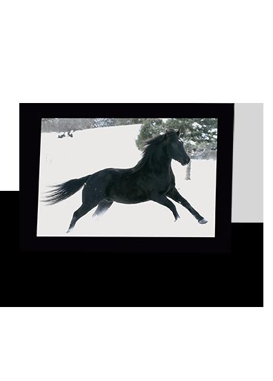 Hi Ho and Away Horse Greeting Card
