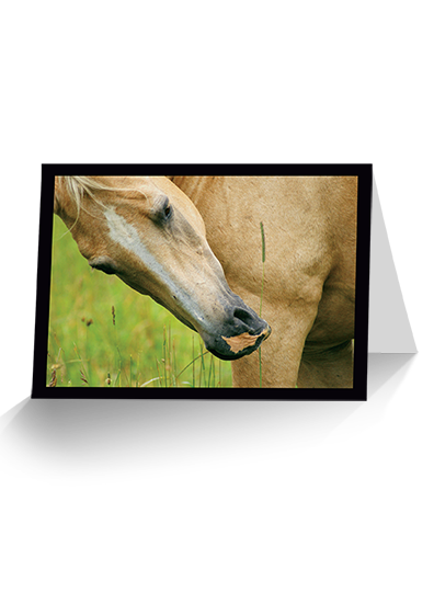 Just One More Thing Horse Greeting Card