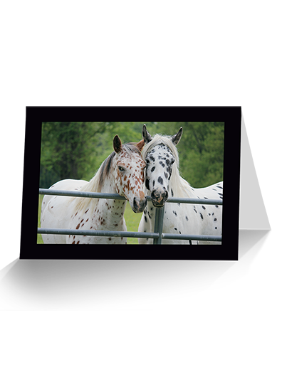 Seeing Spots Horse Greeting Card