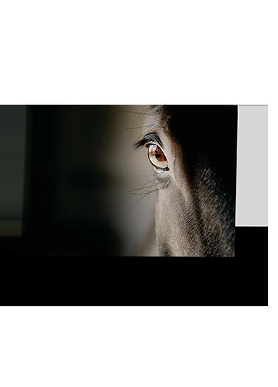 Eye See You Horse Greeting Card