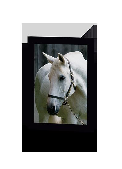 Spike Horse Greeting Card