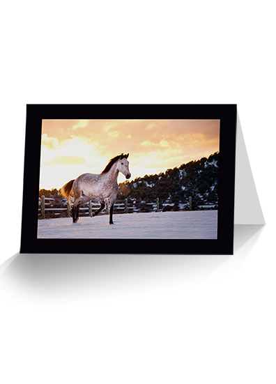 Dun Ice Grey Horse Greeting Card